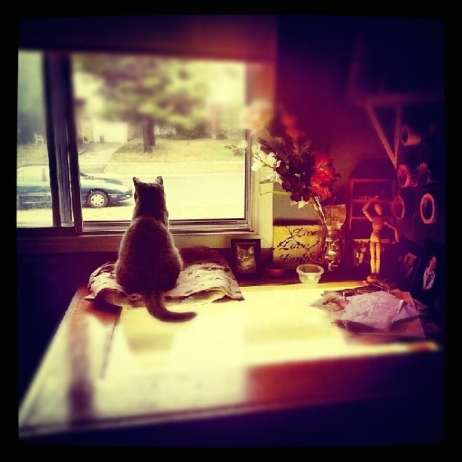 PHOTO-WindowKitty-onDrawingTable-v2